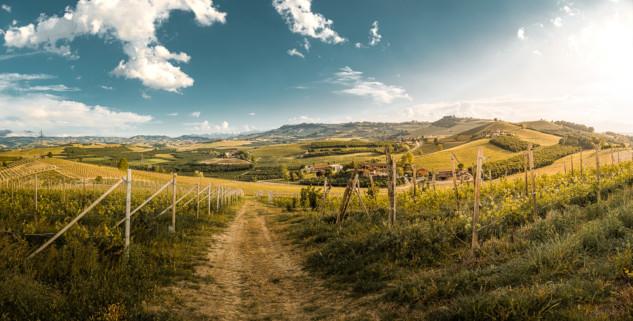Piemontese hills and vineyards